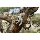 Lucruri surprinzatoare despre cum dorm animalele