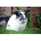 Mediul de crestere potrivit pentru iepurii de companie
