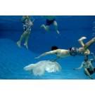 Meduze-robot gigantice vor patrula oceanele pentru a salva viata marina!