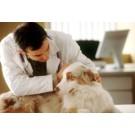 Metode prin care sa previi cancerul canin