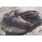 Monstru marin descoperit pe o plaja din Noua Zeelanda