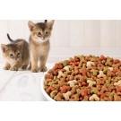 Nevoile nutritionale ale pisicutelor