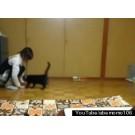 O pisica are parte de distractia vietii ei!