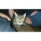 O pisica disparuta de 13 ani s-a reintors acasa!