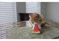 O pisicuta mananca pepene!