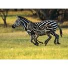 O treime din animalele de pe Terra sunt in pericol de disparitie