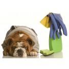 Obiecte din casa care pun in pericol viata animalului de companie