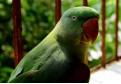 Papagali haiosi care imita sunete