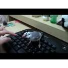 Pasarea care apara tastatura calculatorului!