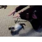 Pisica care imita gesturile unei fetite!