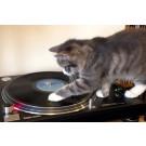 Pisica DJ