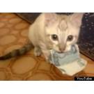Pisica hotomana!