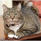 Pisica ministrului de Finante britanic, banuita ca este agent secret al Chinei!