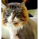 Pisica sau leu?
