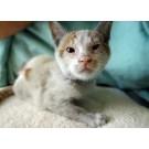 Pisica supravietuitoare calatoriei de 10000 kilometri