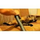 Pisici versus aspiratoare!