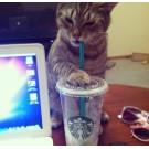 Pisici versus obiecte din casa!