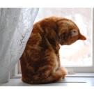 Pisicile si comportamentul compulsiv