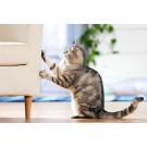 Pisicile si zgariatul: Tot ce trebuie sa stii