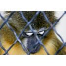 Pot fi animalele deprimate?