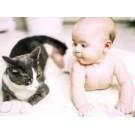 Pregateste pisica pentru intalnirea cu un bebelus in locuinta