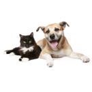 Principale beneficii ale castrarii animalelor de companie