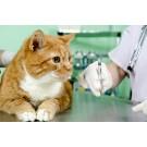 Rapel Vaccin tetravalent RCPCH