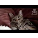 Reactia adorabila a unei pisicute la sunetul facut de foarfece!