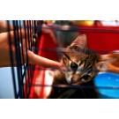 Surprize pentru animalutul tau la targul PetExpo 2013