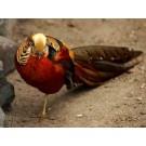 Targ de pasari si animale mici la Oradea in septembrie