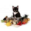 Tot ce trebuie sa stii despre hrana pisicii
