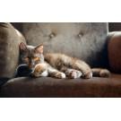 Tot ce trebuie sa stii despre mediul de viata potrivit pentru pisici