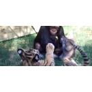Un cimpanzeu, un tigru si un lup sunt cei mai buni prieteni!