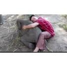 Un elefant extrem de iubitor