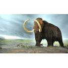 Un mamut cu sange proaspat a fost gasit in Siberia!