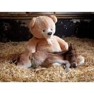 Un ponei orfan doarme cu un ursulet de plus!