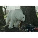Un urs polar pe strazile Londrei