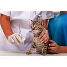 Vaccin tetravalent si antirabic