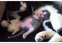 Vezi ce face o pisicuta in timpul somnului!