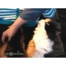 Vezi cum reactioneaza o pisica atunci cand este scarpinata!