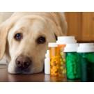Vitamine si minerale pentru caini