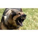 Zonele din Bucuresti cu cele mai multe atacuri ale cainilor fara stapan