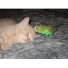 Pasari vs. pisici