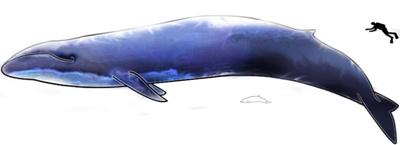 balena-om-inofensive