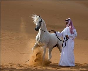 calul-arab-origine-si-istoric