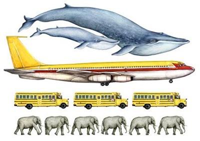 cat-este-de-mare-balena-albastra