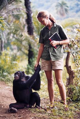 cimpanzeu-om-carne