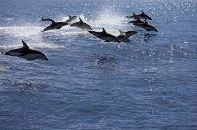 delfini-mamifere