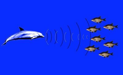 ecolocatia-delfinului-ape-sarate