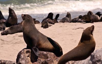 grup-de-foci-apa